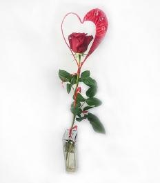 Цветок на 14 февраля 01